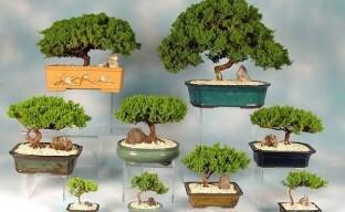 Сад на ладони или искусство бонсай – что это такое?