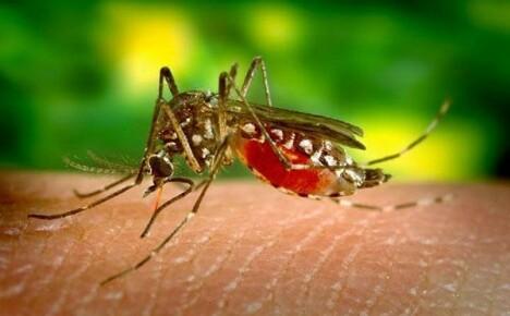 Как отпугивать комаров и лечить укусы насекомых