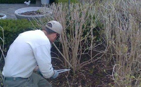 Какие работы необходимо сделать в саду в апреле