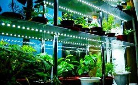 Освещение рассады дома — роскошь или вынужденная необходимость?