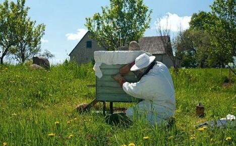 Как сделать отводок пчел весной: видео и описание способов