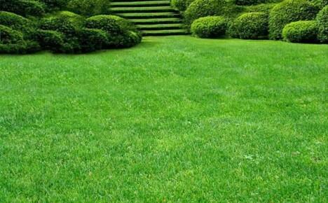 Выбираем лучшую траву для газона на даче