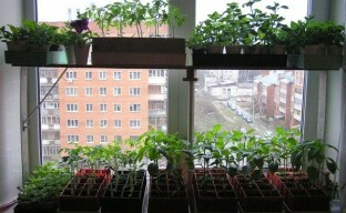 Зачем растениям нужна подсветка