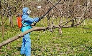Весенняя обработка плодовых деревьев против вредителей и болезней