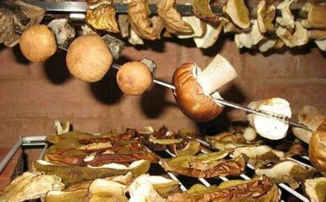 Учимся правильного готовить сушеные грибы