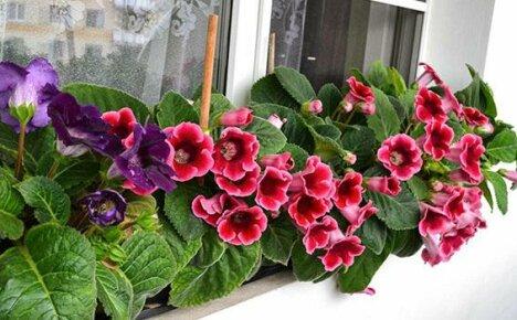 цветы на знакомство фото
