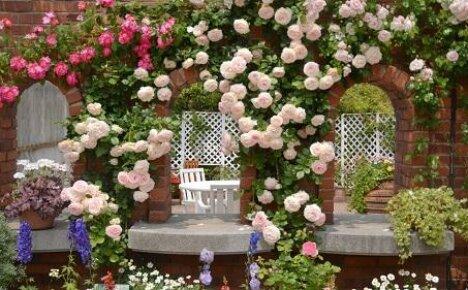 Где садить плетущиеся розы и как за ними ухаживать?