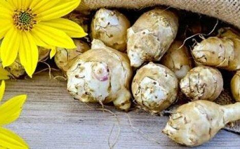 Выращивание земляной груши (топинамбура)