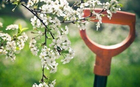 Жаркий май в саду: весенние хлопоты дачника