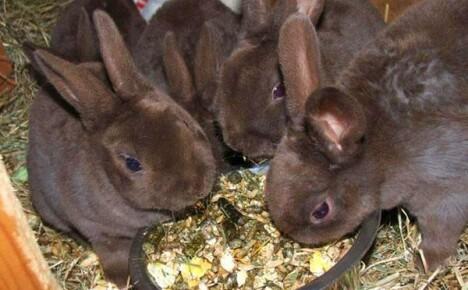 Когда отсаживать крольчат от крольчихи — советы начинающим