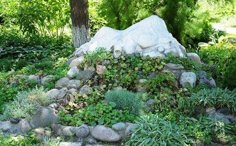 Как правильно подобрать растения для альпийской горки