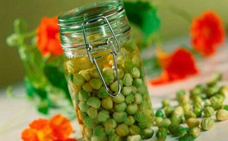 Рецепты приготовления каперсов из семян настурции