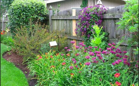 Выращиваем монарду у себя в саду без проблем