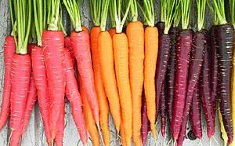 Многоцветная история моркови