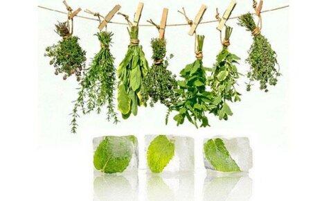 Как заготовить пряные травы на зиму: советы от знатоков