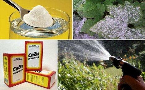 22 оригинальных способа решения огородных и садовых проблем – применение пищевой соды