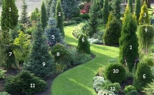 Изысканные хвойные: собираем коллекцию для сада