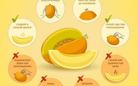 А вы знаете, как правильно выбрать спелую, сладкую дыню?