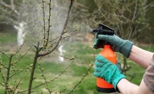 Чтобы защитить сад весной готовим препараты осенью