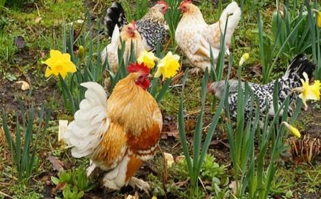 Май на домашней ферме: заботы и радости животновода
