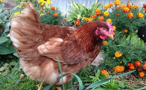 Заготовка кормов и уход за животными в августе
