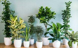Неприхотливые комнатные растения: рейтинг самых популярных