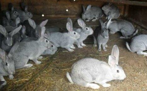 Как содержать кроликов: клеточное и вольное разведение