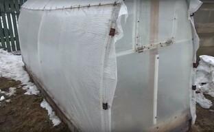Выращиваем огурцы в холодном климате в парниках