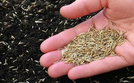 Засеять газон вручную без сорняков не просто, но возможно