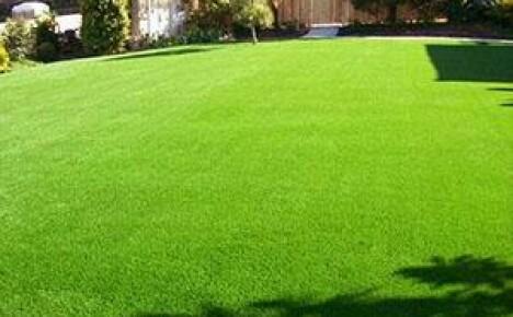 Как сделать газон на даче своими руками?