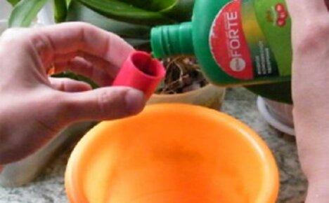 Подкормки комнатных растений жидкими удобрениями: чем и как удобрять