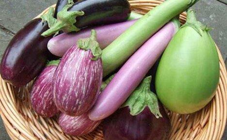 Сорта и виды баклажанов для ваших грядок