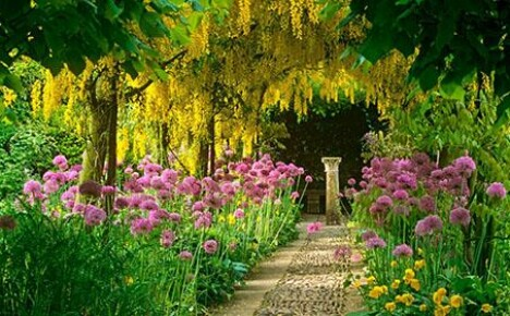 Создать благоухающий сад своими руками совсем не сложно