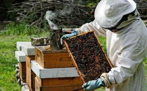 Как правильно организовать пчеловодство для начинающих