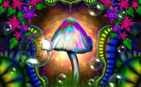 Опасность надо знать в лицо — галлюциногенные грибы