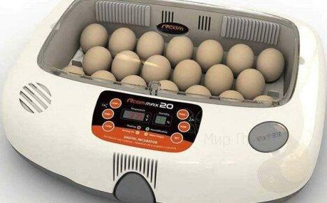 Выбор автоматических инкубаторов для куриных яиц