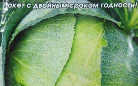 Когда сажать позднюю капусту на рассаду: определяемся со сроками