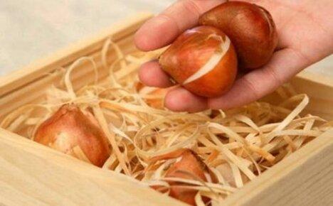 Как хранить луковицы тюльпанов: подготовка и выбор места