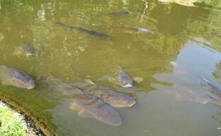 Небольшой пруд для разведения рыбы