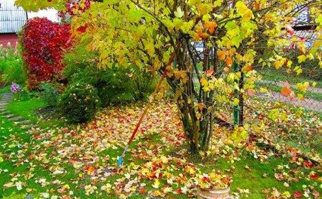 Работы дачника в саду в октябре