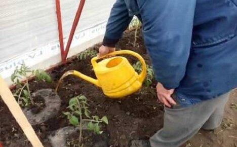 Птичий помет как удобрение для овощей (томатов, огурцов, картофеля): особенности применения