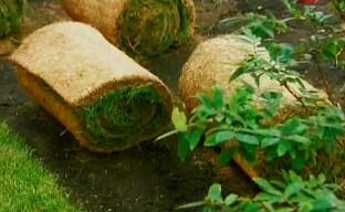 Рулонный газон — выбираем, укладываем