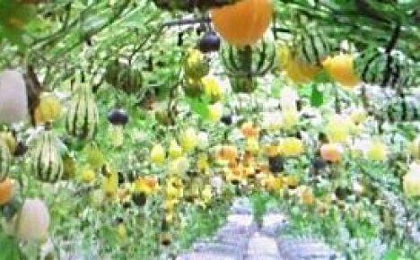 Вертикальные грядки — декоративное искусство (видео)