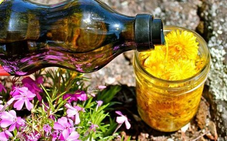 Загадочное масло из желтых одуванчиков