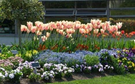 Дайте схемы сочетания цветов на клумбе!