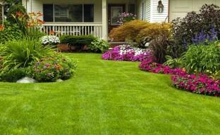 Как посеять газон на даче
