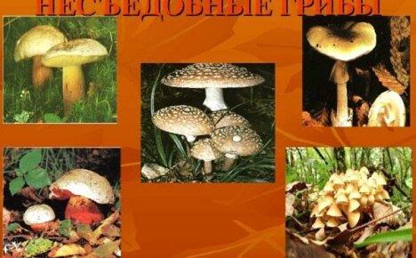 Это необходимо знать: все о несъедобных грибах