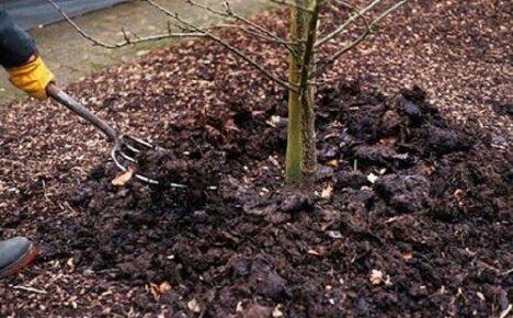 Готовим сад к зиме — чем подкормить плодовые деревья осенью?