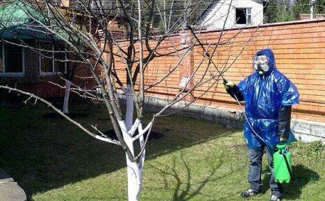 Опрыскивание плодовых деревьев весной необходимо проводить вовремя