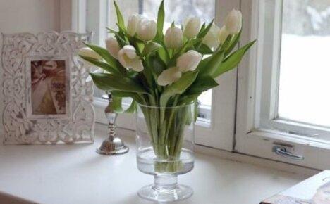 Продлеваем жизнь букету тюльпанов в вазе
